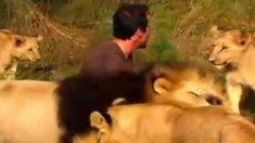 Kevin Richardson, o rei dos leões