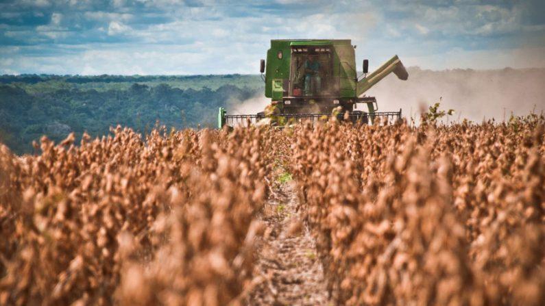 Banco Mundial apoia projeto para soja sustentável no Nordeste