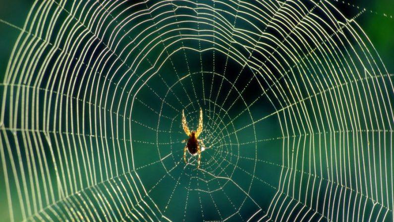 Teia de aranha, um instrumento musical