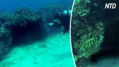 Mergulhadores exploram uma caverna subaquática e ficam cara a cara um predador aterrorizante