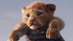 Primeiro trailer do novo filme do Rei Leão acaba de ser lançado (vídeo)
