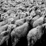 Coletivismo, individualismo e política de esquerda-direita