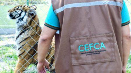 Empresário argentino mantinha quase 100 animais ilegalmente em sua casa, incluindo um tigre de Bengala