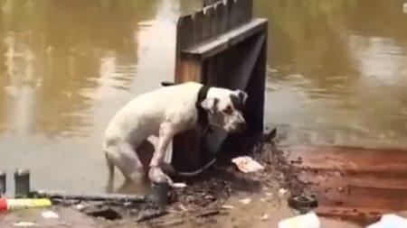 Cachorros esquecidos nas enchentes são resgatados por anjos de barco