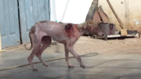 Cachorro com ferida grave na pele precisava de ajuda urgente para sobreviver