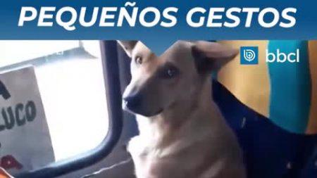 """Motorista trata cachorro que entrou em seu ônibus para """"descansar"""" com gentileza e carinho"""