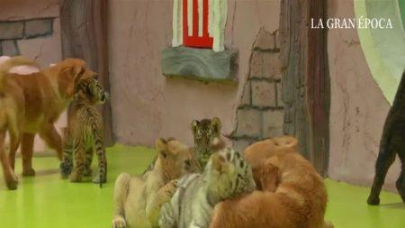 Uma família animal única e incrível nasce no zoológico de Pequim