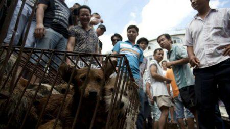 """China realiza """"exposição de cães mais importante do mundo"""" antes do Festival de Carne de Cachorro (Vídeo)"""