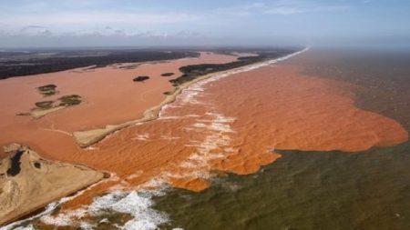 Lama da Samarco contaminou corais do Parque dos Abrolhos na Bahia