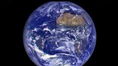 Segunda Sem Carne é boa para o planeta no Dia da Terra e em qualquer outro dia