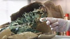 Trabalhadores acidentalmente desenterram 19 jarros romanos e ficam surpresos ao descobrir seus conteúdos