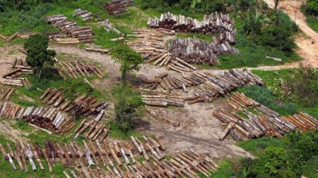 Governo desmonta mentiras sobre desmatamento na Amazônia