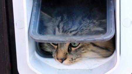 Homem demora quase duas horas para construir porta de gato, mas como seu gatinho à utiliza é hilário