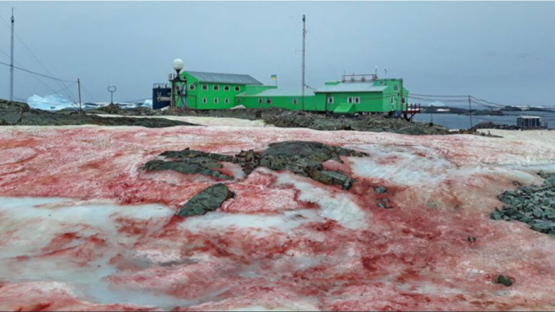 A explicação por trás da estranha tonalidade avermelhada que cobriu certas áreas da Antártica