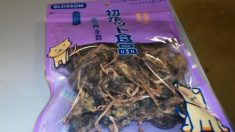 Agentes aduaneiros dos EUA apreendem saco de pássaros mortos de passageiros que viajavam da China
