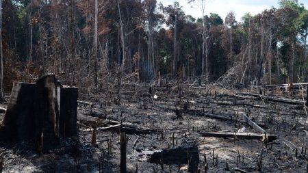 AGU cobra R$ 1,3 bilhão por desmatamento na Amazônia Legal