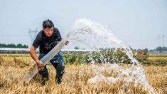 Regime chinês nega escassez de alimentos mas demanda estímulo à agricultura