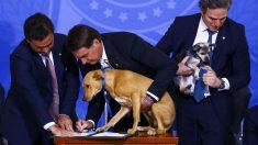 Lei aumenta pena para maus-tratos a cães e gatos
