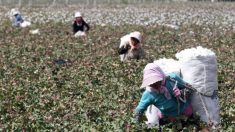 EUA proíbem importação de algodão e outros produtos feitos com trabalho forçado de Xinjiang