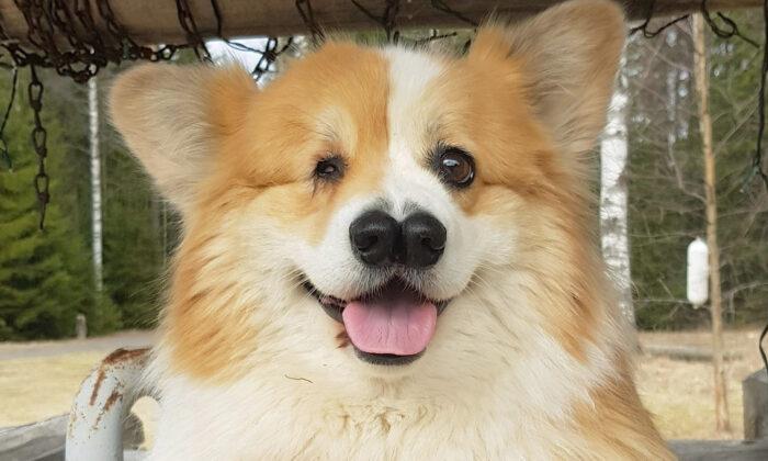 Cadela que nasceu com um olho e dois narizes supera todos os desafios, agora está com 8 anos e muito feliz