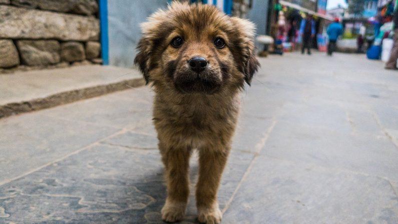 Município brasileiro multa quem ajuda animais vadios com comida e água