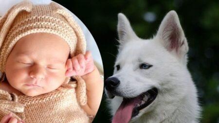 Cachorro encontra bebê recém-nascido abandonado no parque, 'O céu o enviou para resgatá-lo'