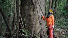 Governo estuda concessão de cinco áreas florestais no Amazonas