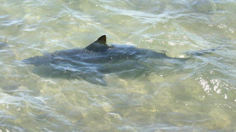 Homem fica em estado grave após ser atacado por tubarão na Califórnia