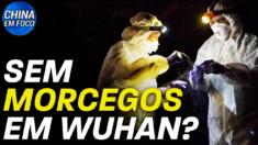 Nenhum morcego vendido em Wuhan em 2019