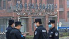 Vídeo de morcegos no laboratório de Wuhan aumenta o detalhamento das investigações