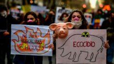 Argentinos rejeitam acordo com Pequim para implantação de fazendas de suínos