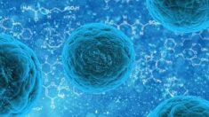 A 4ª fase da água: nossa saúde celular vem em parte da qualidade do nosso 'gel'