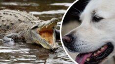 Homem resgata seu cachorro da boca de crocodilo: Corri o mais rápido que pude!