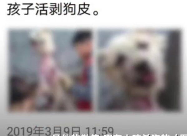 Imagem de um cachorro que teria sido esfolado vivo com a ajuda de uma criança (The Beijing News)